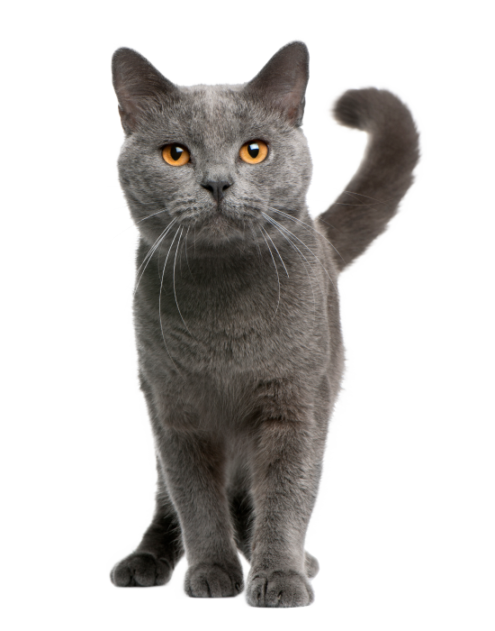tienda de gatos en tu tienda de animales en barcelona