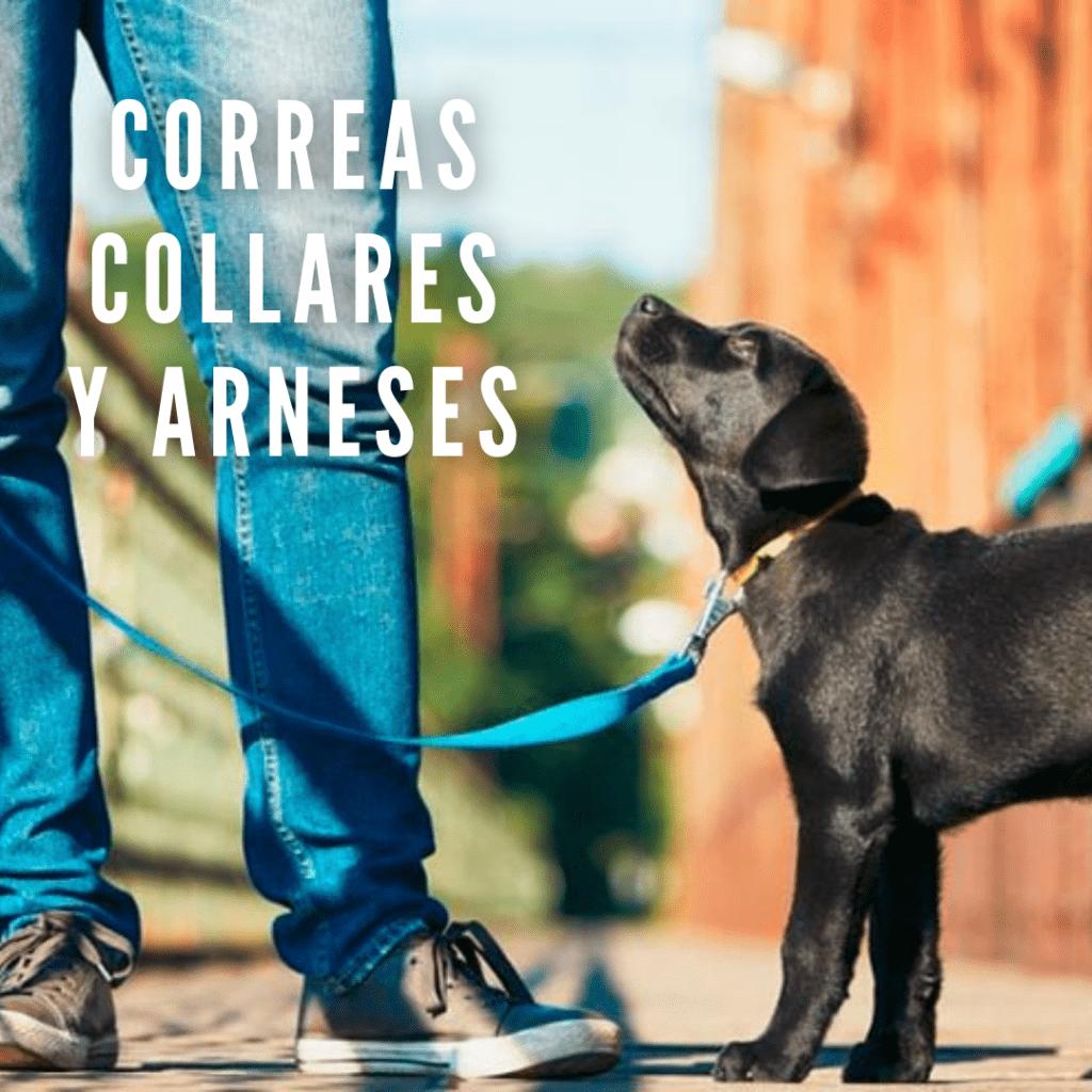 Correas collares y arneses para perros